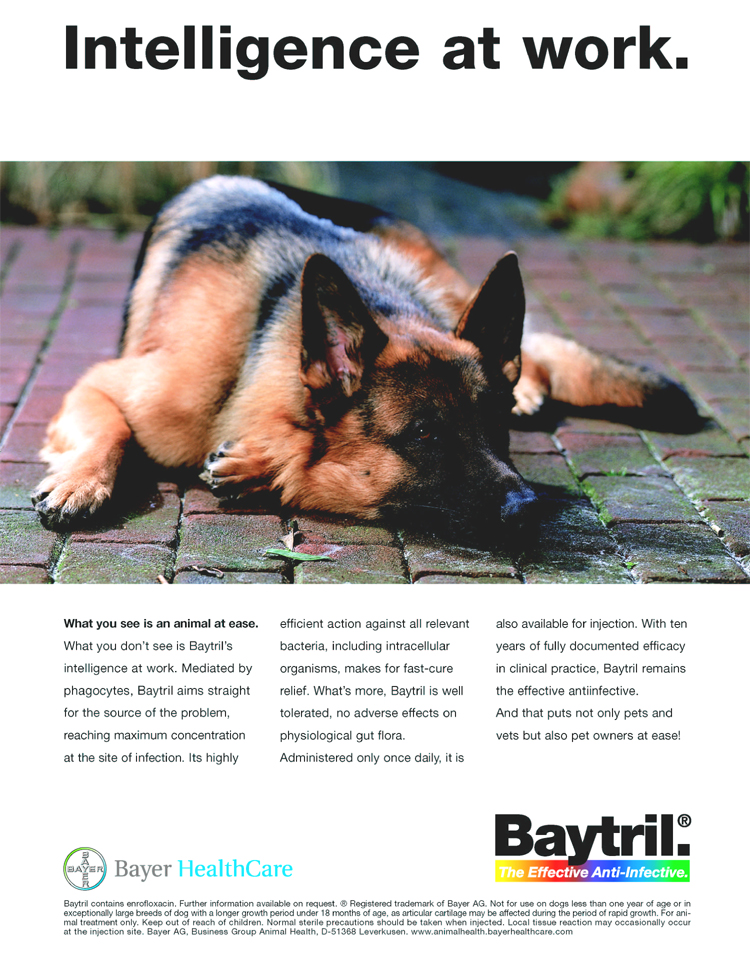 Where Can I Buy Baytril For Cats