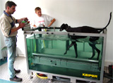 Physiotherapy on Dogs: the KEIPER Underwater Treadmill