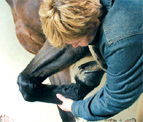 Courses for Equine Practitioners 2009